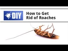 This video shows how to get rid of and kill roaches with a proper roach control bait treatment. With the quickest killing action of any of the Maxforce baits, you'll stop seeing live roaches inside your home within 1-4 days. For a guide to killing roaches yourself, click here: https://www.pinterest.com/pin/237635317814263067/ For more information on roach treatments, go to http://www.domyownpestcontrol.com/how-to-get-rid-of-roaches-a-458.html