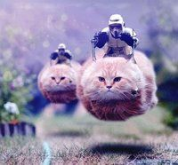 catmobiles..... hahaha I enjoy this picture way to much!! haha