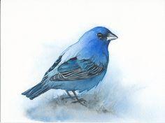 Indigo Bunting  original watercolor by GreenvilleFineArts on Etsy
