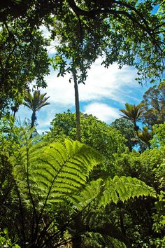 Green, green, green. Impossible to beat New Zealand for beautiful green.