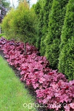 Bewitching Garden For Beginners Link Ideas 6 Mighty Tips AND Tricks: Backyard Garden Oasis Fun garden ideas fence dreams. Landscaping Trees, Privacy Landscaping, Backyard Privacy, Front Yard Landscaping, Privacy Trees, Arborvitae Landscaping, Acreage Landscaping, Hydrangea Landscaping, Garden Paths