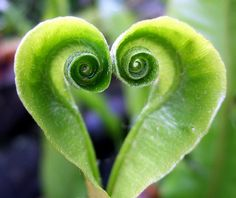 hearts-in-nature / spiral leaves Heart In Nature, Heart Art, I Love Heart, Happy Heart, Heart Pics, Heart Pictures, Dream Pictures, Lonely Heart, In Natura