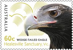 Healesville Sanctuary in Victoria opened in 1934, and is dedicated to the conservation of native fauna including the Platypus, Tasmanian Devil and Leadbeater's Possum. The sanctuary's oldest animal, as well as one of its most popular, is Jess the Wedge-tailed Eagle.  http://auspo.st/Sz5ytP
