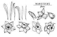 Narcissus Or Daffodil Flower Narcissus Flower Tattoos, Birth Flower Tattoos, Birth Flowers, Daffodils, Arm Tattoo, Beautiful Flowers, Ink, Tattoo Designs, Tattoo Ideas