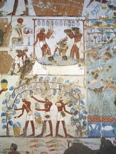 Tending grapes: Egypt, Thebes, Luxor