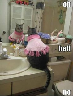 I did this to my cat once. I came home to find the sweater floating in the toilet and her completely dry...