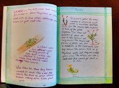 Waldorf ~ 5th grade ~ Botany ~ Lichen & Moss ~ main lesson book