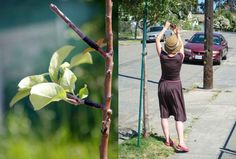 "There is a group of fruit lovers in San Francisco that practice something known as ""guerrilla grafting"" –  they graft fruit bearing branches onto fruitless, ornamental trees across the Bay Area city."
