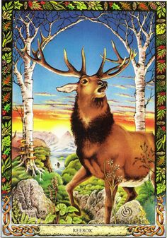 Stag | The Druid Animal Oracle by Stephanie and Phillip Carr | Meaning: pride, independence and purification | Reversed, it advises us to examine our lives to see how much pride may be hindering us in our growth.