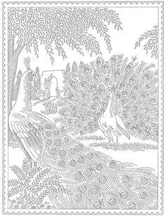 http://qisforquilter.com/wp-content/uploads/Laura-Wheeler-Transfer-683-Peacocks.jpg