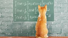 Cats are smart, furr