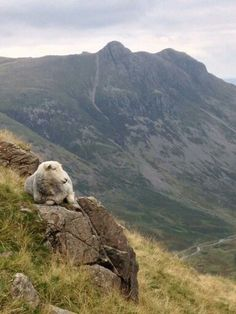 Herdy with the Langdales. Great pic from Chef Woody.
