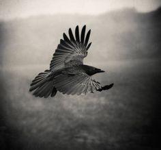 © Holger Droste