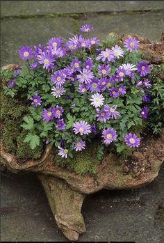Spring garden container ...