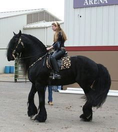 Friesian, that is the most beautiful horse I have ever seen❗❗❗❗❗ l love horses