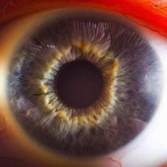 Photographic Print: Close Up of Human Eye Poster by Suren Manvelyan : 16x16in
