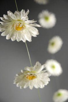 Gerbera Daisy Garlands (18 flowers)  6 ft  White  $5.99   each / 3 for $5 each