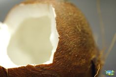 These days, we all know about the amazing superpowers of coconut. But do you know the difference between coconut butter and coconut oil? While they are both derived from the same fruit, coconut butter and oil are quite different from each other. Coconut Oil Coffee, Best Coconut Oil, Coconut Oil For Face, Coconut Oil Uses, Benefits Of Coconut Oil, Organic Coconut Oil, Diy Natural Beauty Recipes, Beauty Tips, Diy Beauty