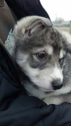 This Makes Me Think Zeus Has To Be Relatedlol Funny - Guy quits his job to go on epic adventures with his husky