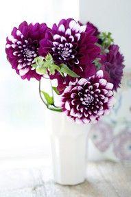 Small arrangement in purple --lovely. Dahlia or zinnia. both lovely Purple Dahlia, Deep Purple, Purple Flowers, White Dahlias, Purple Mums, Magenta, Fake Flowers, Fresh Flowers, Beautiful Flowers
