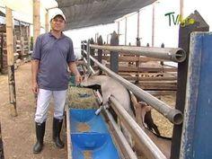 Manejo de cabras Estabuladas - Juan Gonzalo Angel - TvAgro