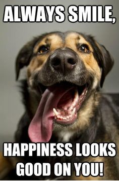 believes that Happiness looks good on you! Animal Pics, Funny Animal Pictures, Cute Funny Animals, Funny Pics, Cute Dogs, Funny Stuff, Silly Faces, Animal Posters, Dog Breeds