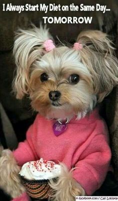 Funny Yorkshire Terrier Dog - She's got the right idea