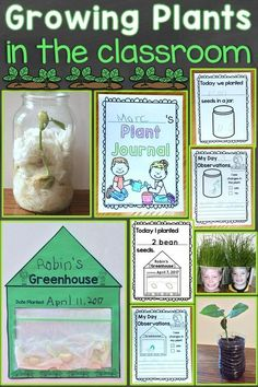 Ideas for growing plants in the classroom with your students Find hands-on science activities and both print and digital ideas for recording observations growingplants plants scienceforkids Plant Experiments, Plant Science, Science Experiments Kids, Science For Kids, Science Activities, Classroom Activities, Science Classroom, Summer Science, Science Fun