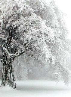~ love this tree ~
