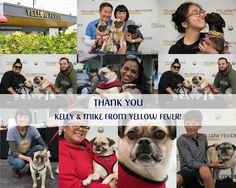 """A few months back Kelly and Mike owners of Yellow Fever restaurant (yummy """"Asian Bowls for your Soul"""") approached us and asked if we would partner with their first ever """"Barking Lot"""" event as they would like the proceeds to benefit Pug Nation. The event was Sunday and it was amazing--the community came together we all had a great day and today Kelly came by the facility and presented us with a check for $1151!! They are true Pug lovers (top row center with their babies) and we so appreciate…"""