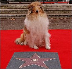 Lassie's Star of Fame