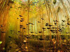 Foret de Nénuphars 50 photos hallucinantes qui capturent des moments extraordinaires de la nature sauvage.