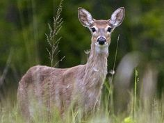 Plants Trees Flowers And Shrubs Deer Will Not Eat