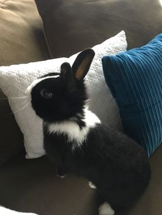 This is my bunny, Penny