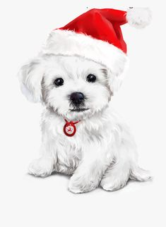 Merry Christmas Dog, Christmas Time ... Merry Christmas Dog, Christmas Topper, Christmas Time, Holiday, Christmas Scenes, Christmas Animals, Terriers, Dog Christmas Pictures, Baby Posters