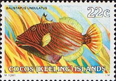 Cocos Keeling Islands 1979 Fishes SG 39a Undulate Triggerfish Fine Mint Scott 40  Other Cocos Keeling Island Stamps HERE