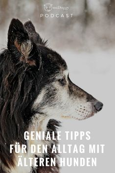 #Hunde    #Hund    #Alterhund    Tipps    Ideen    Tricks