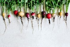 Home-grown radishes