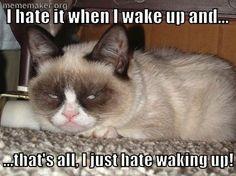 grmpy cat, funny grumpy cat, grumpy cat quotes ....For the ...