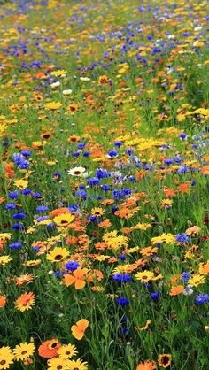 Summer Flowers Poppies Fence Macro wallpaper x Wild Flower Meadow, Meadow Flowers, Wild Flowers, Beautiful Flowers, Beautiful Pictures, Nature Aesthetic, Flower Aesthetic, Beautiful Landscapes, Beautiful Gardens