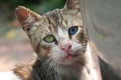 Tiger the street cat http://ift.tt/2kMww7K