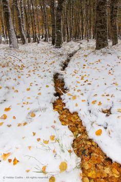 Outono com (cheiro) a Inverno - II by Helder Coelho on 500px