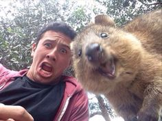 This will be me with a quokka in a few weeks