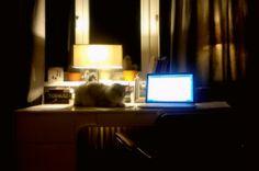 Cute motivation to study hard.