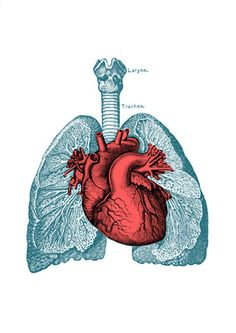 Heart and Lungs Anatomy print A3 poster Science prints by PRRINT
