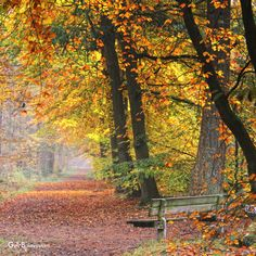Drenthe, Netherlands timeout (by Gerrit de Boorder) Serenity Now, Autumn Scenery, Autumn Leaves, Amsterdam, Country Roads, Waves, Graphic Design, Fall, Beach