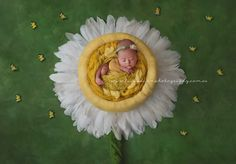 Dainty Daisy Newborn Portrait By Luisa Dunn Photography