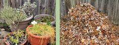 Last-minute gardening tasks to prepare for winter. Container Gardening, Gardening Tips, Ceramic Bird Bath, Wood Mulch, Gardening Magazines, Garden Compost, Autumn Garden, Glass Garden, Garden Ornaments