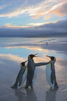 Amazing Photography | Sorry Penguin! Three's a Crowd! Photo credit: Олег О on Google+