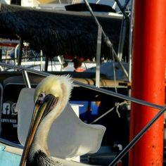 #mosaic #animalsofinstagram #birds #pelican #seaofcortez #sea #travellerspx #travelgram #beginnersmx #México #latinoamerica #hechoenmexico #landscape #boat #hallazgosemanal #wanderlust by the_frock_. latinoamerica #landscape #wanderlust #animalsofinstagram #mosaic #travelgram #travellerspx #boat #sea #hallazgosemanal #seaofcortez #beginnersmx #pelican #hechoenmexico #birds #méxico #micefx [Follow us on Twitter (@MICEFXSolutions) for more...]
